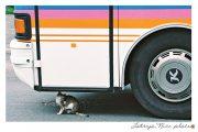 """Kartīte, """"Kaķis zem autobusa"""" (100x150mm)"""
