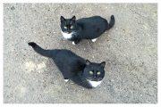 """Kartīte, """"Divi kaķi"""" (100x150mm)"""